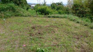 草むしり:広瀬