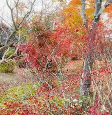 秋が終わる前に : 林